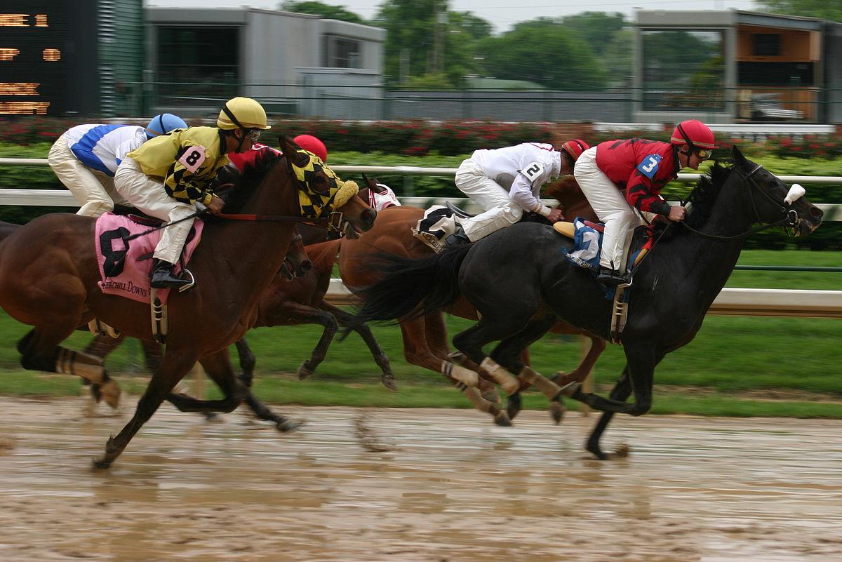 Pigeon Racing an Introduction to an Addictive Sport